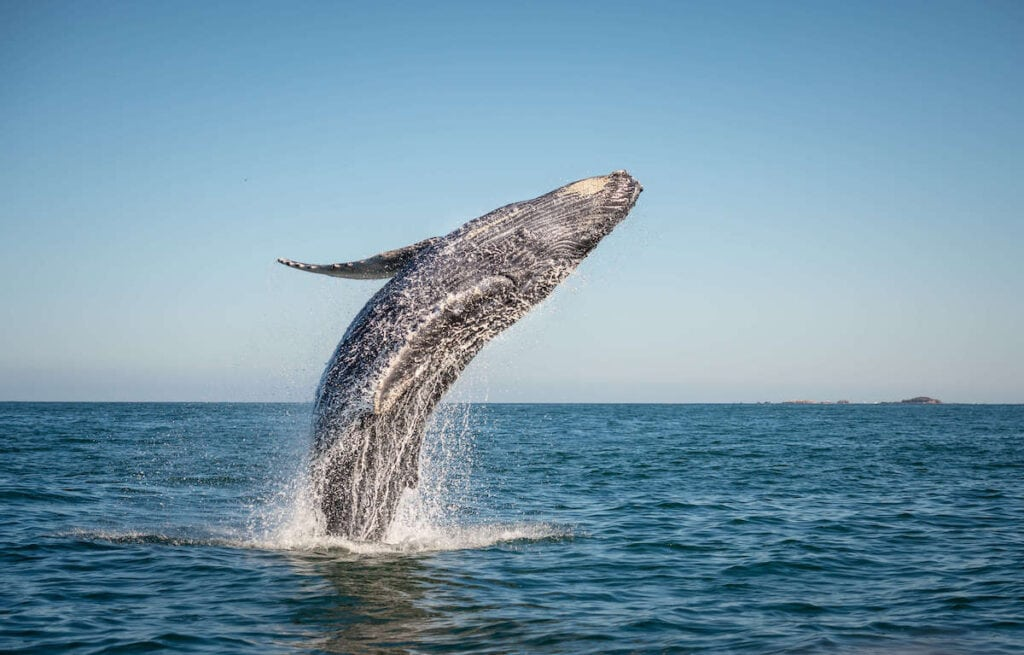 Whale Watching // The best California road trips stops for outdoor adventure including California's National Parks, monuments, coastal towns, and more.