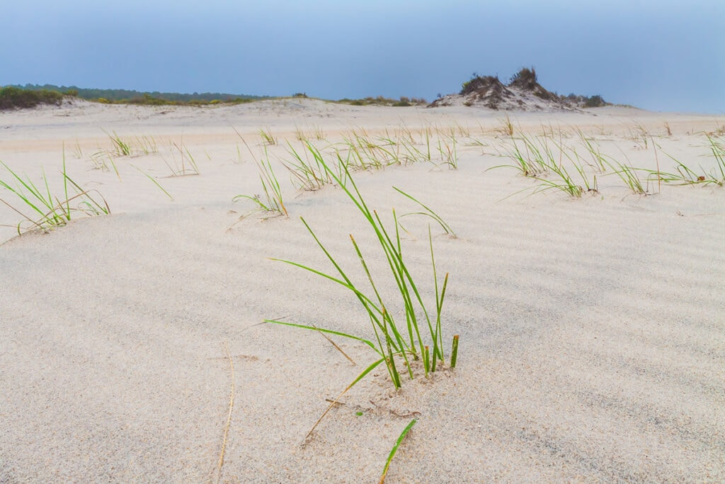 Learn all about beach camping and things to do on Assateague Island