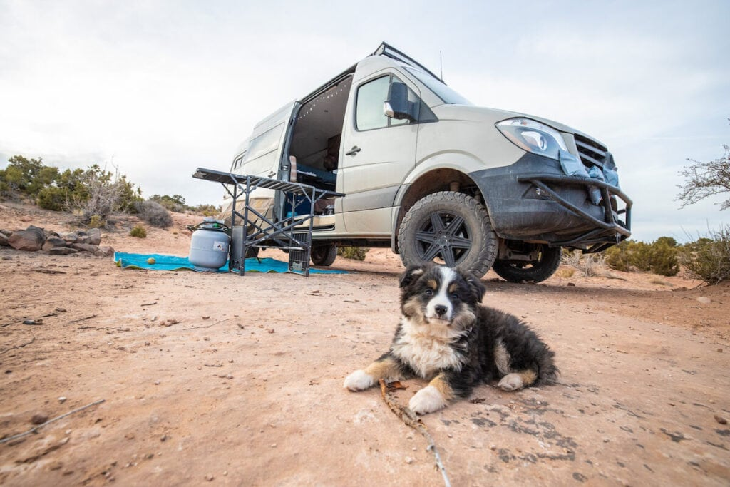 Gumbo in the desert with a Sprinter in the background // Get 15 practical tips for road trips with your dog, including training & ideas for keeping your dog exercised & entertained on the road.