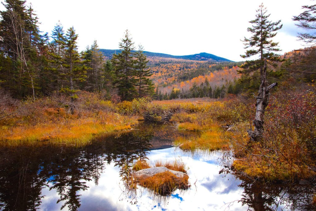 Zealand Peak Trail // Explore the best New Hampshire hikes to see fall foliage with our comprehensive hiking guide including directions and trail stats.